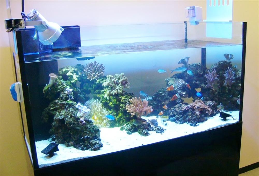 沖縄電力東京支社様に 150cm本格サンゴ水槽を設置しました メイン画像