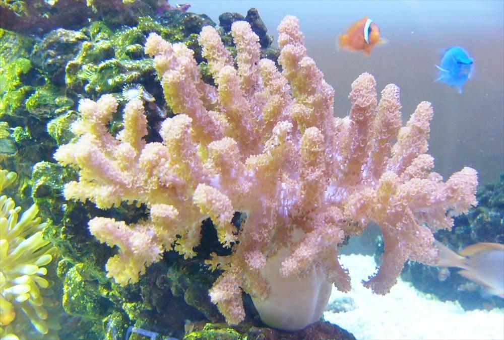 熱帯魚水槽にRO浄水器を使う!今さら聞けないメリット・デメリットのサムネイル画像