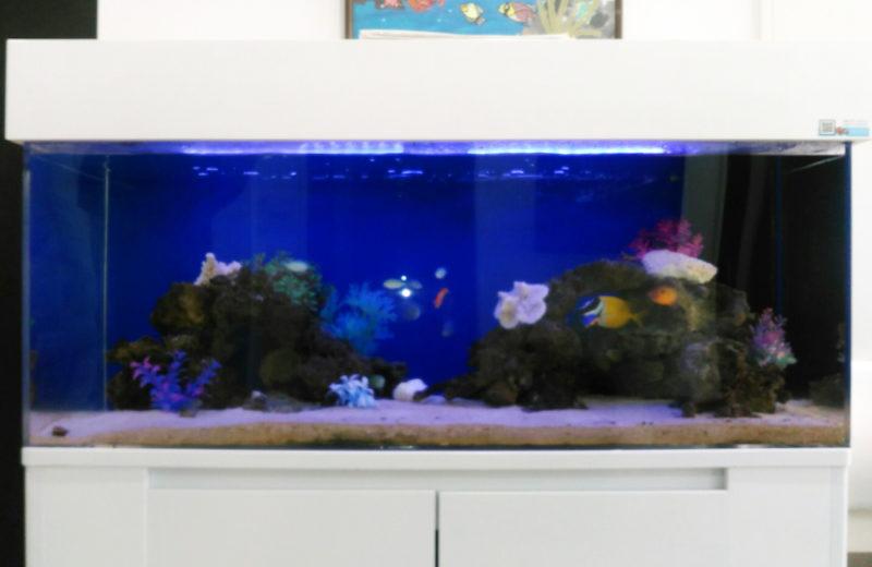 練馬区 皮膚科小児科の待合室 120cm海水魚水槽 リース事例 その後 水槽画像2
