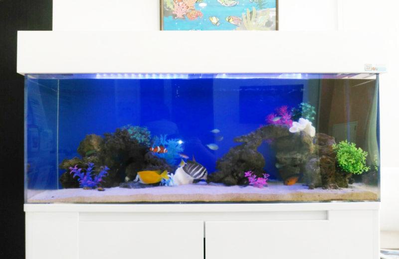 練馬区 皮膚科小児科の待合室 120cm海水魚水槽 リース事例 その後 水槽画像5