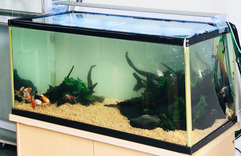個人宅様が所有されている90cm金魚水槽のリニューアルを行いました 水槽画像4