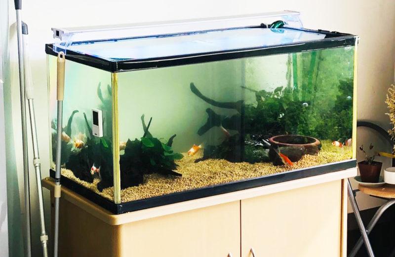 個人宅様が所有されている90cm金魚水槽のリニューアルを行いました 水槽画像5