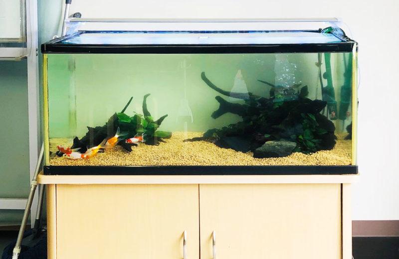 個人宅様が所有されている90cm金魚水槽のリニューアルを行いました 水槽画像3