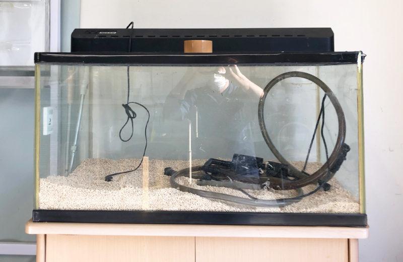 個人宅様が所有されている90cm金魚水槽のリニューアルを行いました 水槽画像2