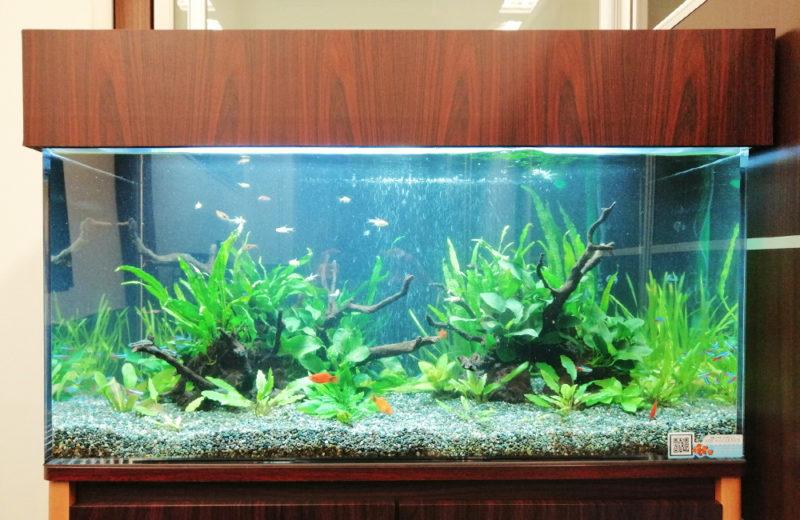 株式会社イー・ブレーン様 90cm淡水魚水槽 レンタル事例 水槽画像4