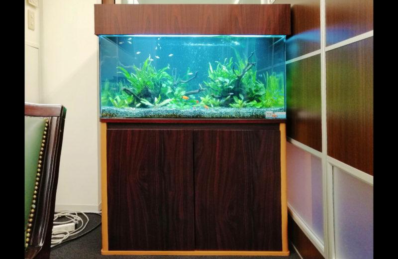 株式会社イー・ブレーン様 90cm淡水魚水槽 レンタル事例 水槽画像3
