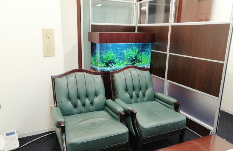 株式会社イー・ブレーン様 90cm淡水魚水槽 レンタル事例 水槽画像5