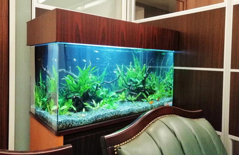 株式会社イー・ブレーン様 90cm淡水魚水槽 レンタル事例 水槽画像1