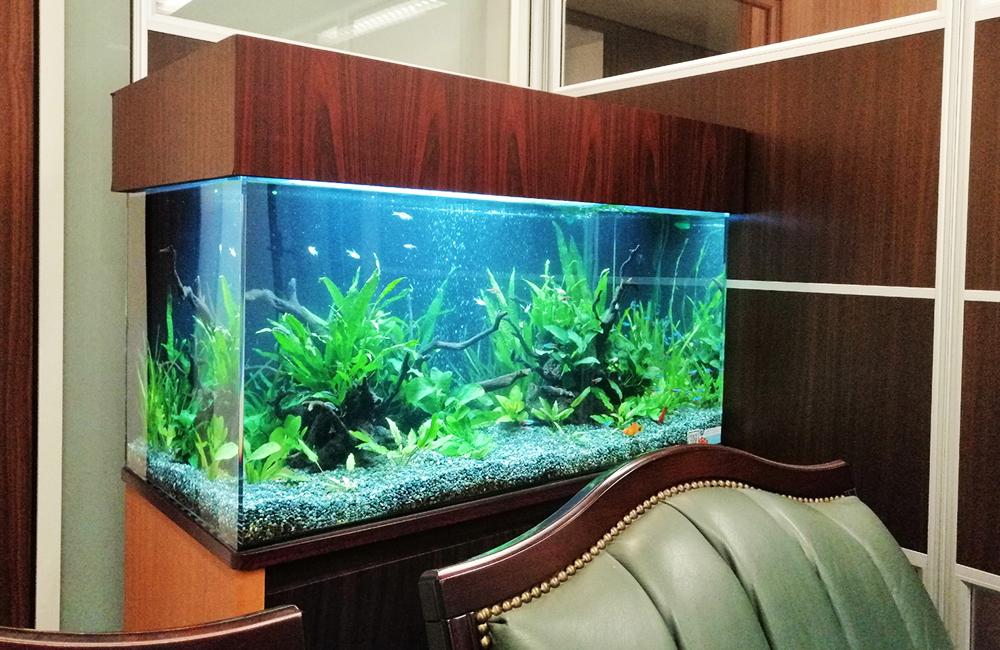 株式会社イー・ブレーン様 90cm淡水魚水槽 レンタル事例 メイン画像