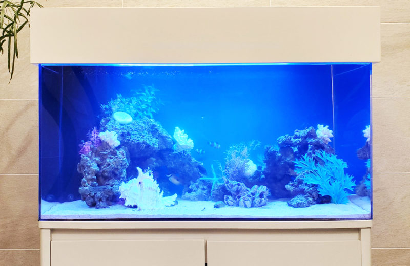 個人宅様 90cm海水魚水槽 設置事例 その後 水槽画像3