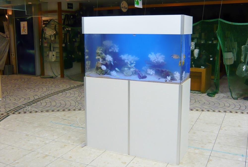 千葉県商業施設 様に120cm海水魚水槽を設置しました メイン画像