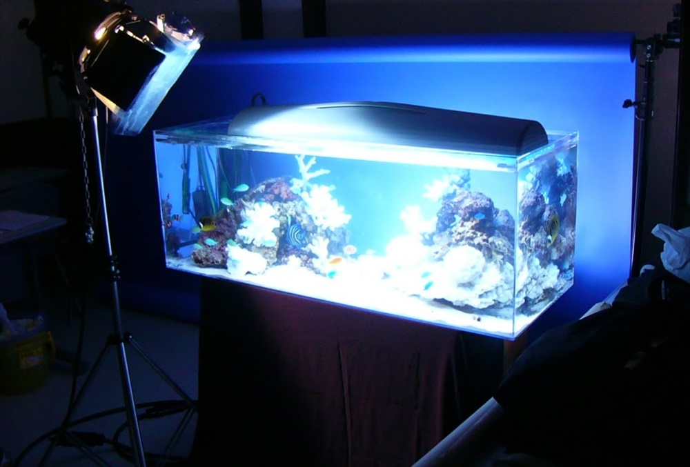 短期レンタル水槽で雑誌の撮影協力を行いました メイン画像