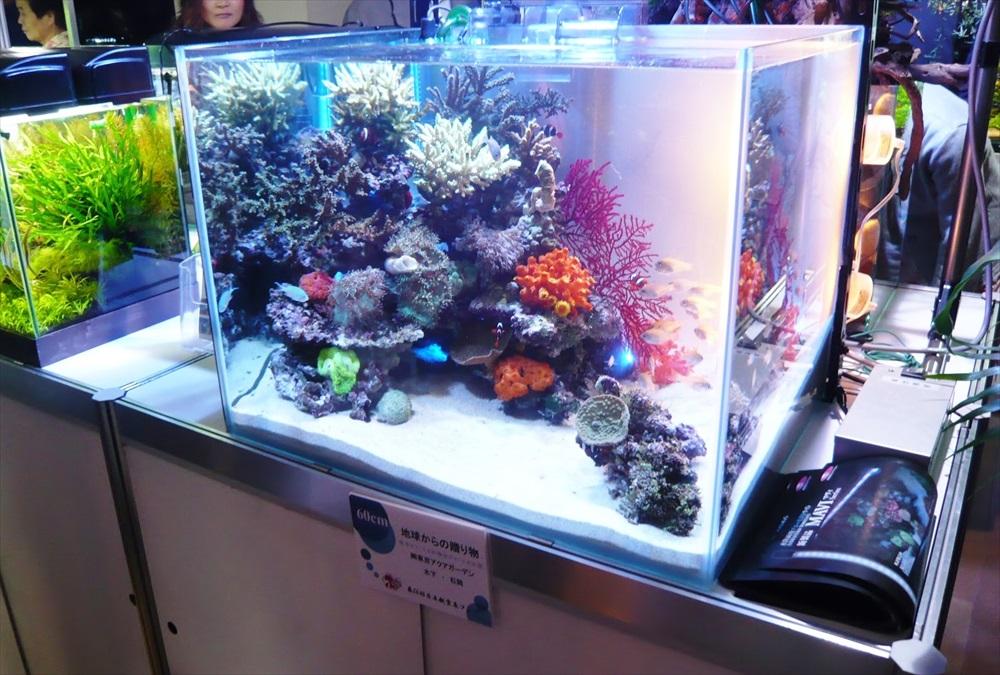 水槽コンテスト60cm海水魚水槽を出展 メイン画像