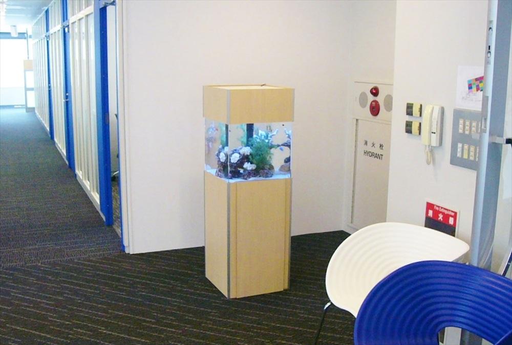 オリコン株式会社様に45cm海水魚水槽を設置しました メイン画像