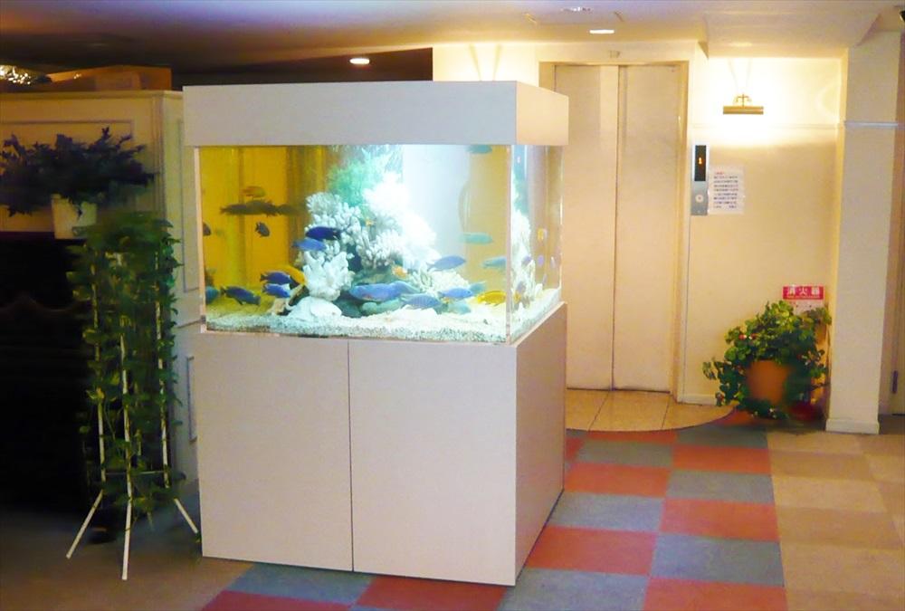 ホテルレッツ様 150cmシクリッド水槽のメンテナンスを担当しました メイン画像