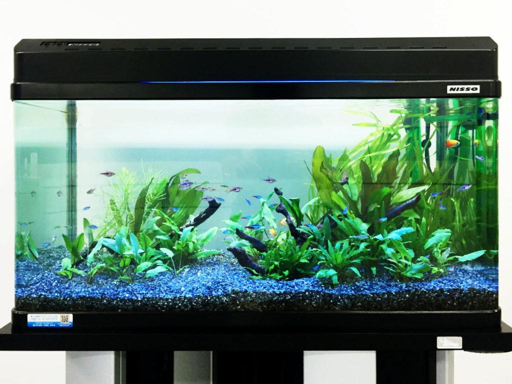 初心者向けの水槽セットをプロが厳選!サイズ別おすすめ商品を紹介!のサムネイル画像
