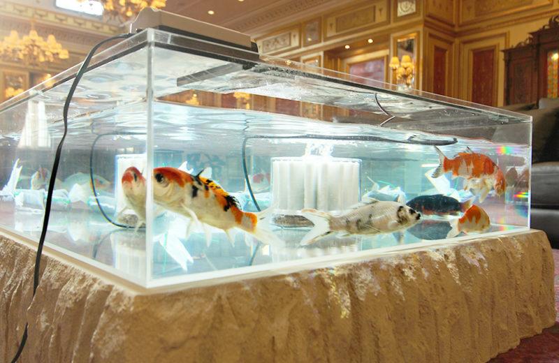 テレビドラマ『ネメシス』撮影現場に大型のテーブル水槽を設置! 水槽画像3