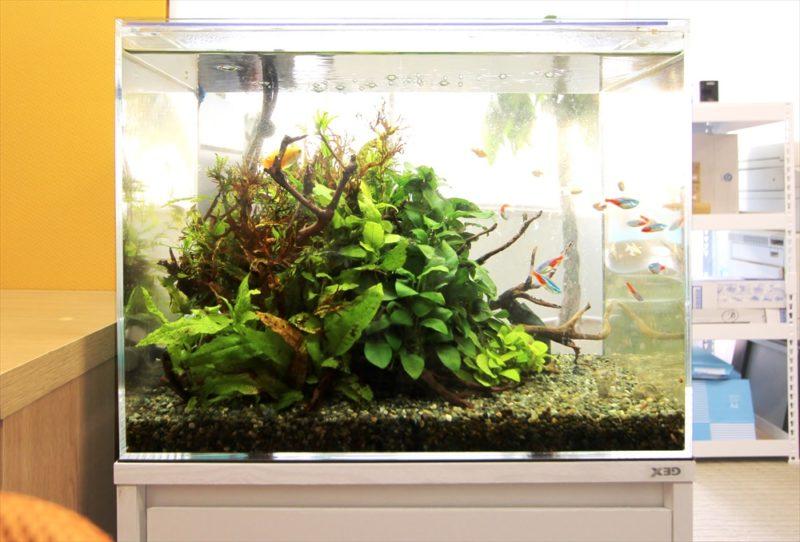 中央区 法律事務所 45cm淡水魚水槽 設置事例 水槽画像1