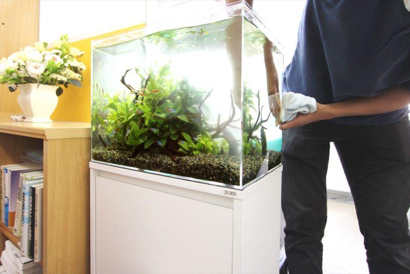 中央区 法律事務所 45cm淡水魚水槽 レンタル事例 水槽画像2