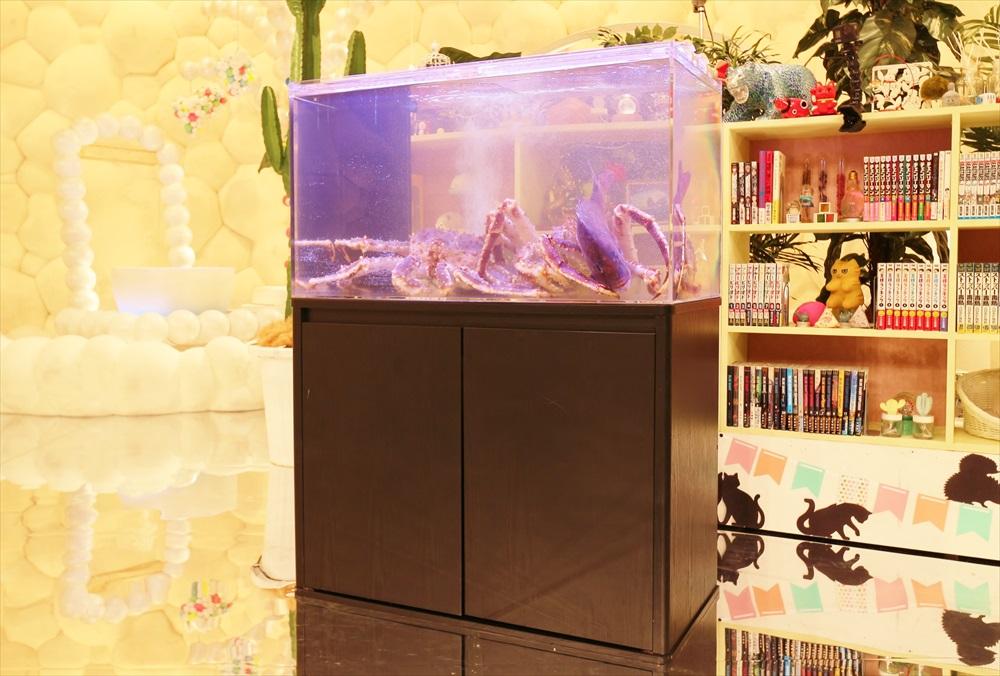 テレビ番組 撮影 活魚水槽 斜め画像
