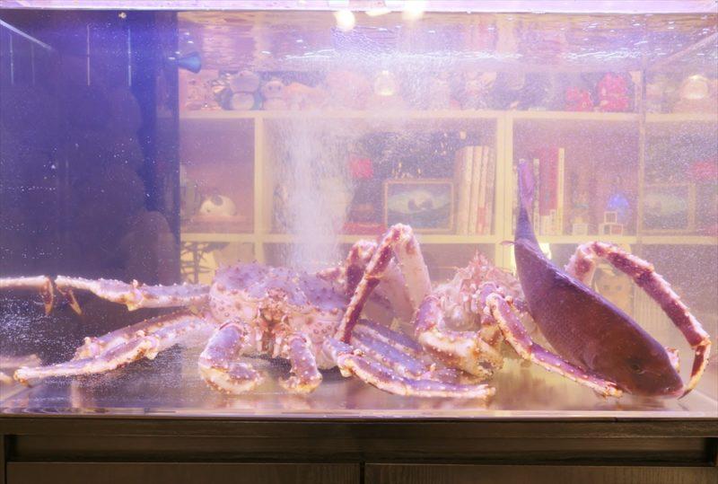 テレビ朝日『マツコ&有吉 かりそめ天国』活魚水槽短期レンタル 水槽画像3