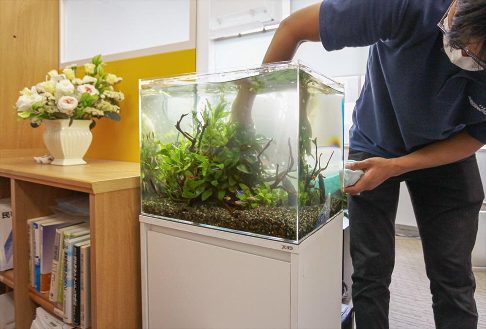 法律事務所 45cm淡水魚水槽 メンテナンス画像