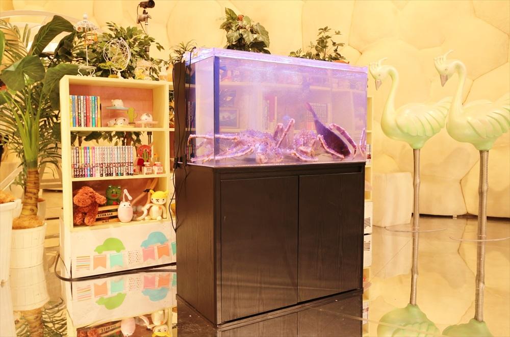 テレビ番組 撮影 活魚水槽 斜め引き画像