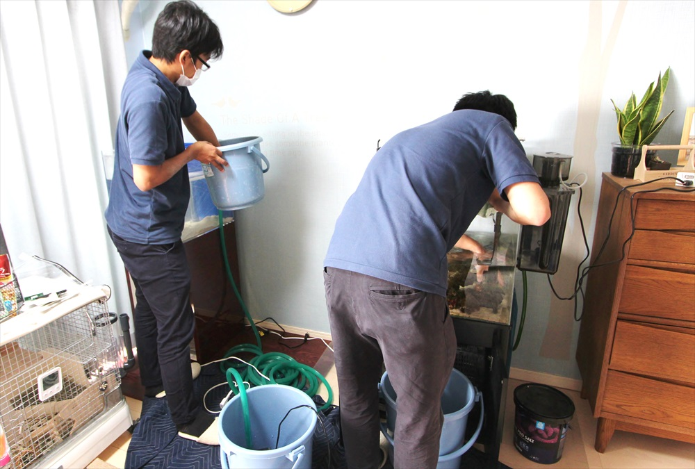個人宅 海水魚水槽 作業画像