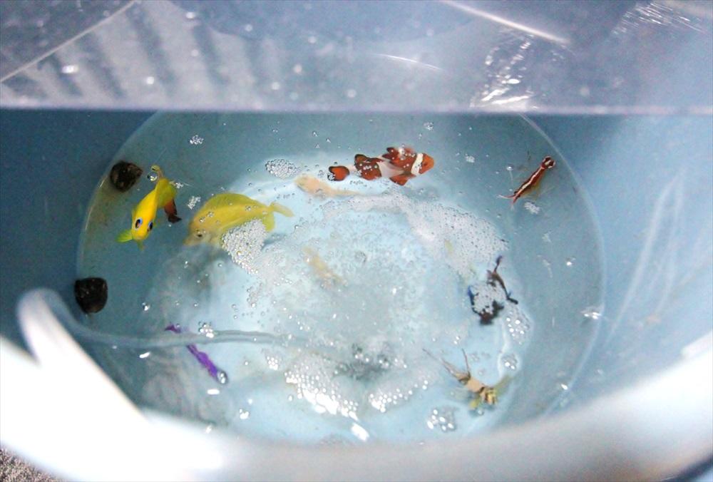 個人宅 海水魚水槽 生体画像