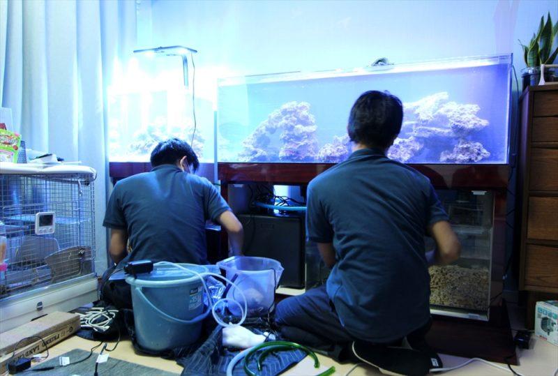 個人宅のリビング 海水魚水槽2台 水槽一式販売・設置事例 水槽画像4