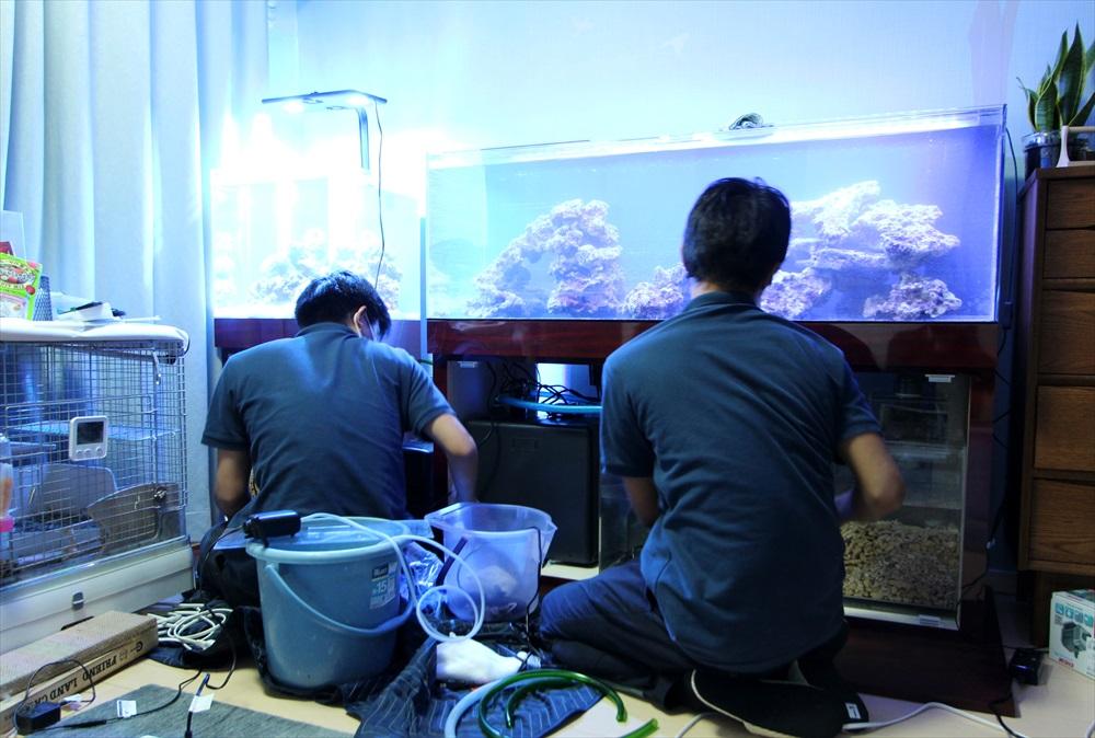 個人宅 海水魚水槽 設置画像