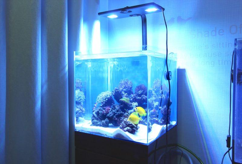 個人宅のリビング 海水魚水槽2台 水槽一式販売・設置事例 水槽画像2
