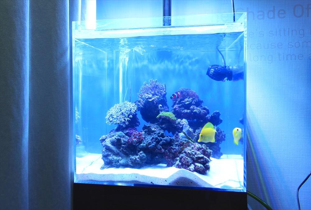 個人宅 海水魚 キューブ水槽画像