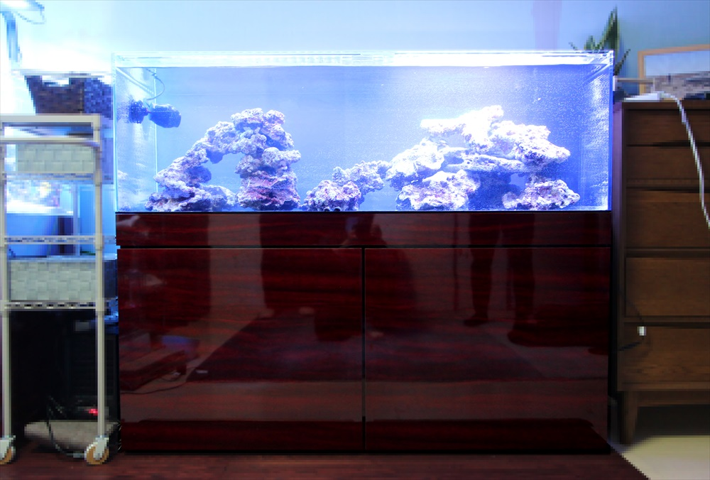 個人宅 海水魚水槽 正面画像