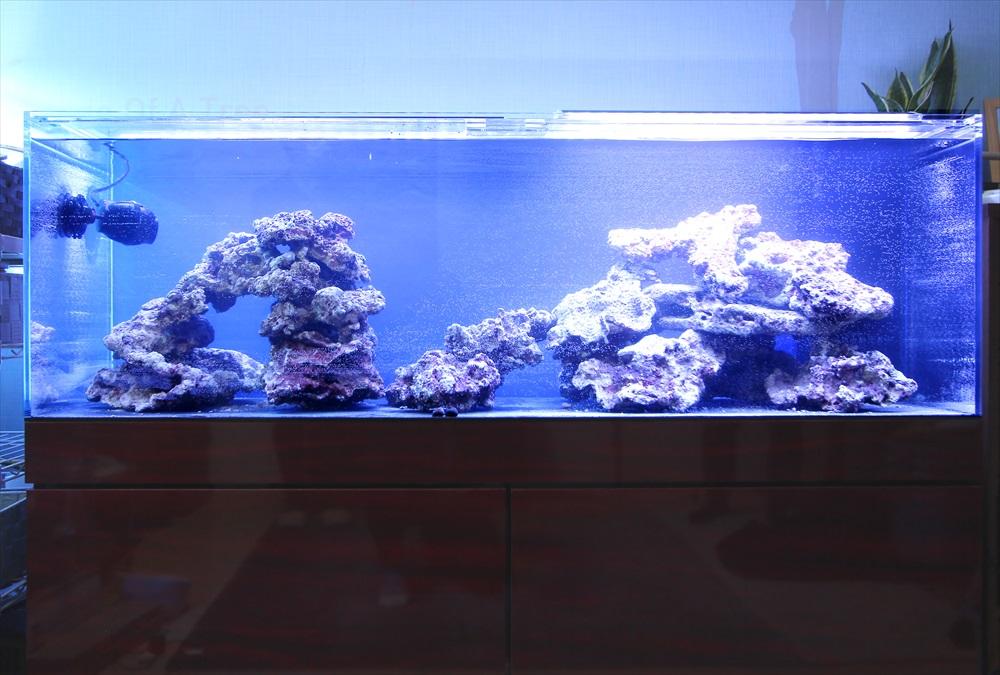 個人宅 海水魚水槽 レイアウト画像