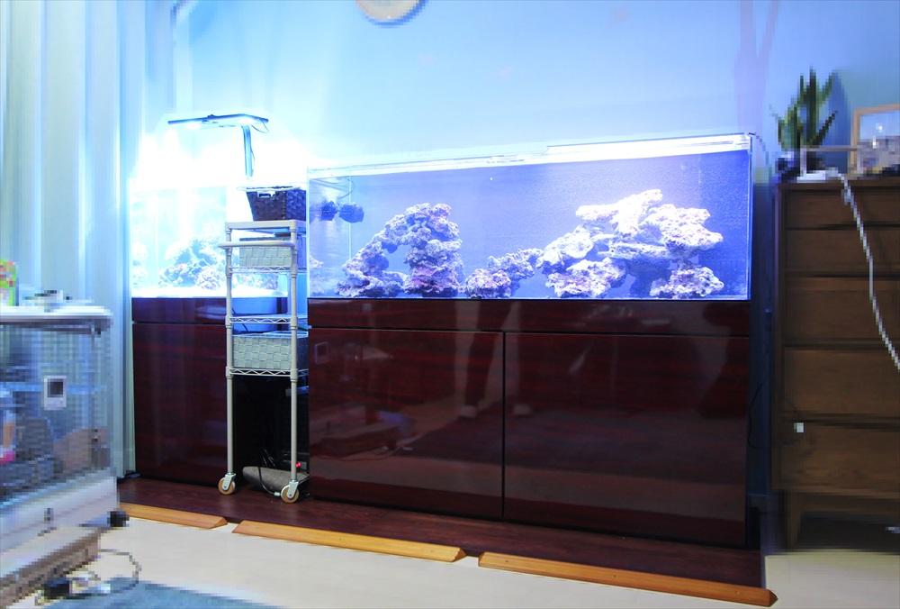 個人宅のリビング 海水魚水槽2台 水槽一式販売・設置事例