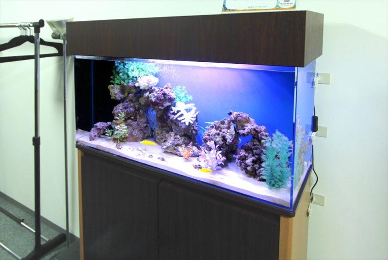 中央区 オフィス事務所 90cm海水魚水槽 レンタル事例 その後 水槽画像1