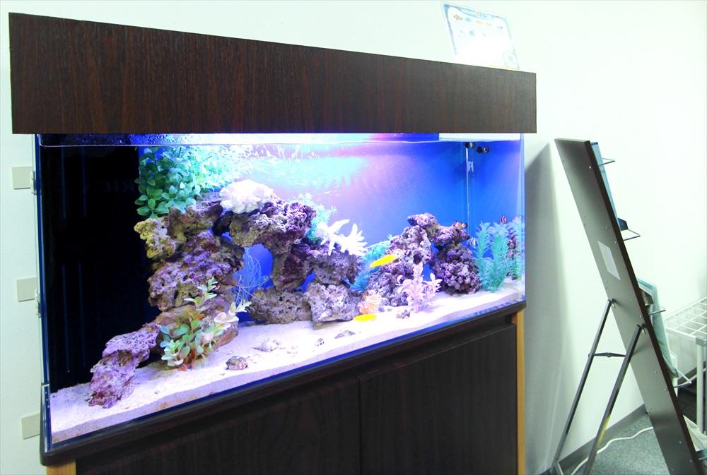 オフィス事務所 90cm海水魚水槽 斜め画像