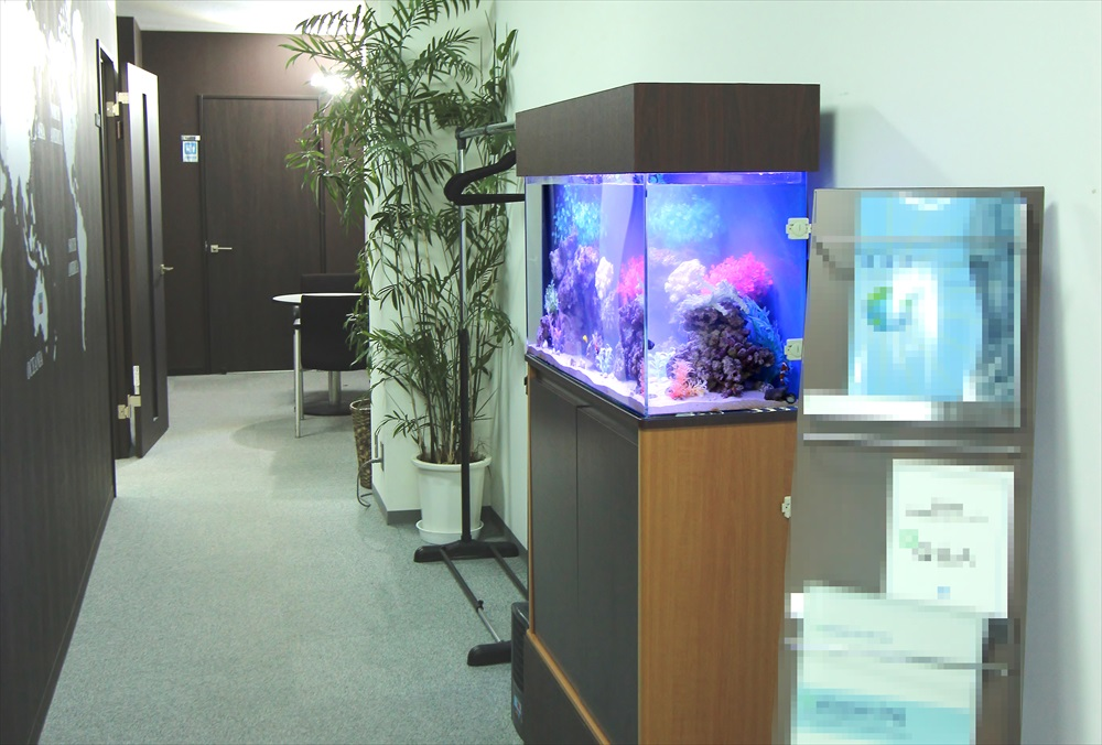 オフィス事務所 90cm海水魚水槽 耐震ベルト画像