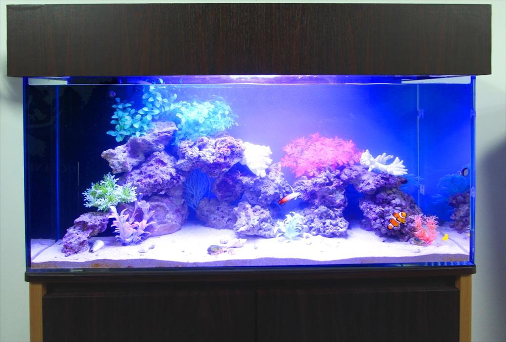 オフィス事務所 90cm海水魚水槽 正面アップ画像