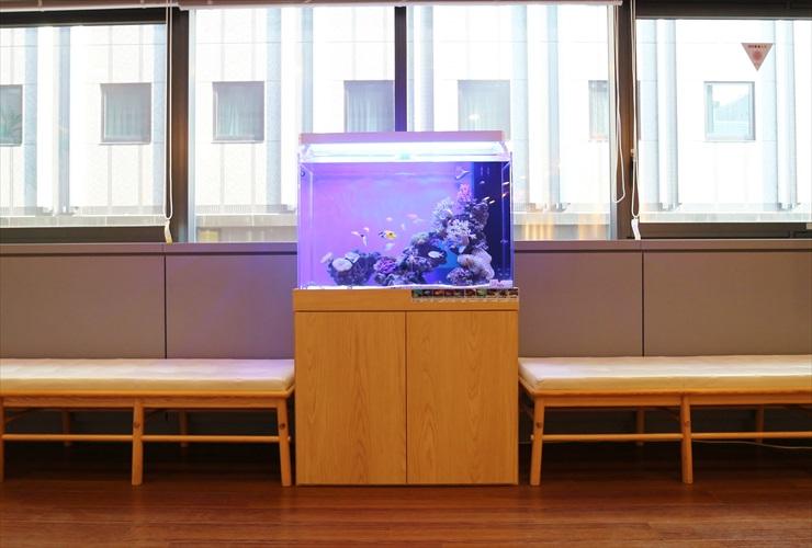 水槽台のおすすめメーカー品ベスト5!水槽台選びのポイントとは 水槽画像