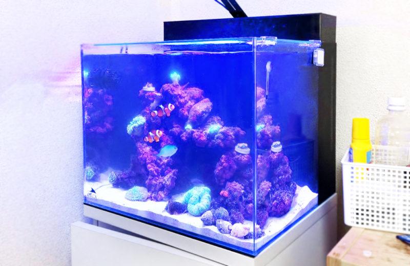 個人宅 海水魚水槽 スポットメンテナンス事例 水槽画像1