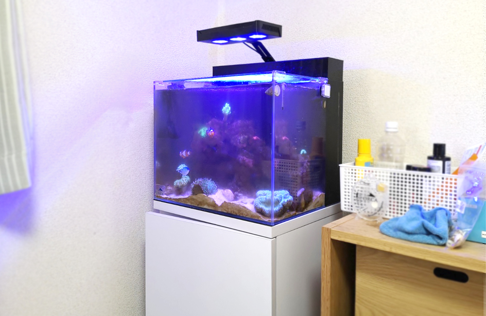 海水魚水槽 スポットメンテナンス コケ全体画像