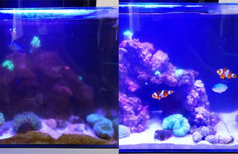 個人宅 海水魚水槽 スポットメンテナンス事例 水槽画像2