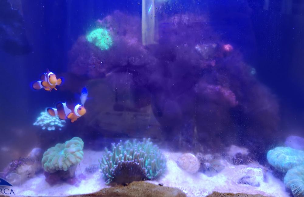海水魚水槽 スポットメンテナンス コケ画像