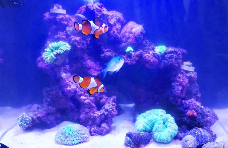 個人宅 海水魚水槽 スポットメンテナンス事例 水槽画像3