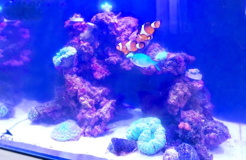 個人宅 海水魚水槽 スポットメンテナンス事例 水槽画像5