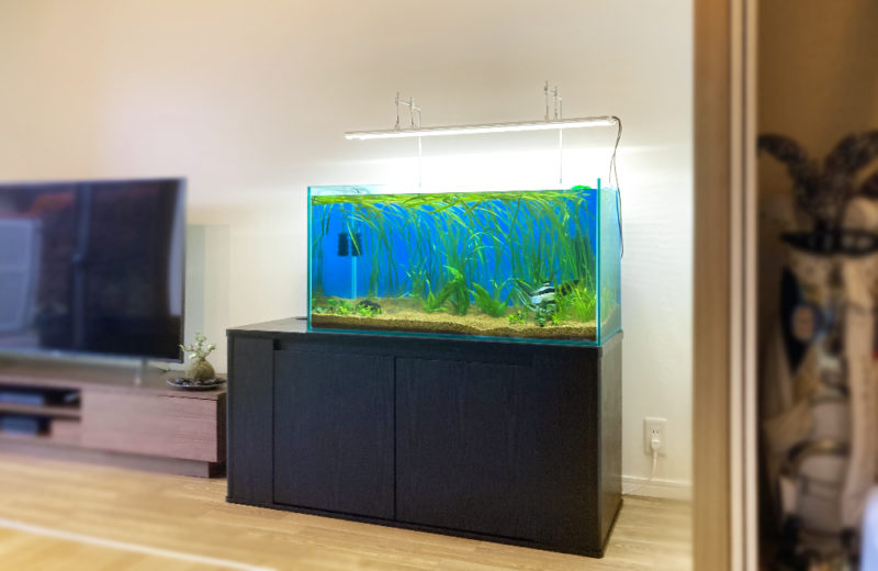 個人宅 90cm淡水魚水槽 販売・引っ越し事例 水槽画像4
