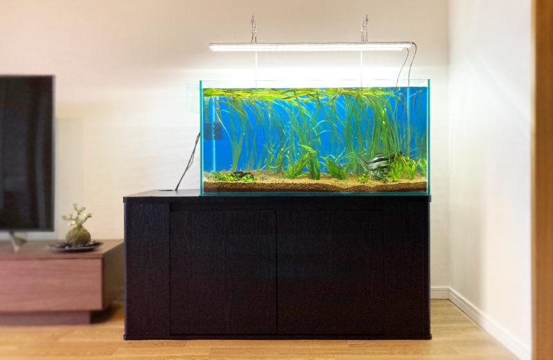 個人宅 90cm淡水魚水槽 販売・引っ越し事例 水槽画像2