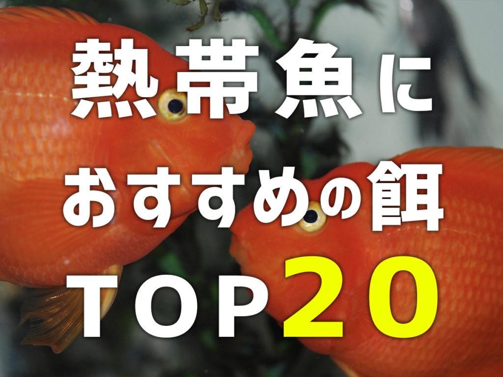 【2021年】熱帯魚におすすめの餌TOP20・サイズと種類別にご紹介しますのサムネイル画像